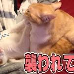 ふと隣を見たら猫が襲われていた