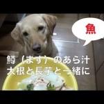 犬のご飯:魚大好き!鱒(ます)のあら汁
