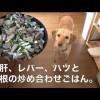 犬の手づくりご飯:砂肝、レバー、ハツと大根の炒め物