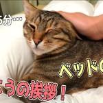 飼い主が起きた時の猫たちの反応が個性的すぎたwww