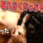ビニール袋に顔を突っ込んで取れなくなっちゃった猫
