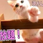 【ガラス張り】猫を真下から覗けるちょっとHな猫タワーを買ってみた!