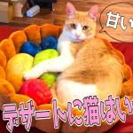 超かわいい猫用ベッドで眠そうな猫が可愛すぎる!