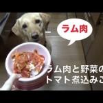 犬のご飯:ラム肉のトマト煮込み
