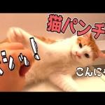 【おこなの?】手を近づける飼い主に強烈な猫パンチをする猫