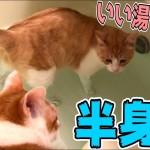 当然のようにお風呂で半身浴をしちゃう猫www