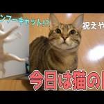 猫の日らしいので猫たちと○○しちゃいます…!?