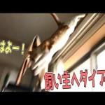 猫が天井から飼い主にめがけてダイブしてきた!!【最強の目覚まし】