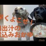 犬の手作りご飯:鶏出汁の煮込みおかゆ