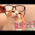 猫に眼鏡を使ってウザ絡みしてみた!【inお風呂】
