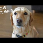 犬のご飯:白菜とひき肉の炒め煮ごはん