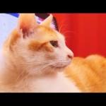 猫たちの近況についてと投稿再開のお知らせ