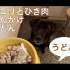 犬の手づくりご飯:セロリとひき肉のあんかけうどん