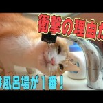 猫が風呂場の水を好きな衝撃的な理由が判明したらしい…!
