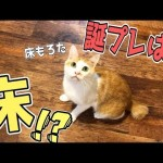 """猫の誕生日に""""床""""プレゼントしてみた!"""