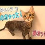 2万円のシャンプーで猫を水責めしたらめちゃくちゃ細くなっちゃったwww