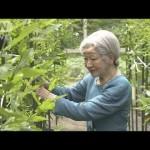 皇后さまが最後のご養蚕 皇居で伝統の「山つけ」(18/05/02)